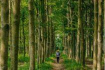 Maleta de Viajes, viajes, turismo, bosques, tierra, Maleta Eco, Tree-Nation, contaminación