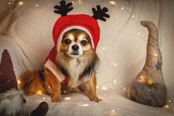 Maleta de Viajes, viajes, turismo, cultura, Navidad, perros, Dog Hero, cena navideña