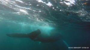 Maleta de Viajes, viajes, turismo, cultura, MaletaEco, ballena, SeaWorld, medio ambiente