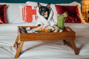 Crítico Canino, Hoteles.com, pet friendly, hotel, turismo, perros, Maleta de Viajes, hospedaje