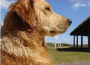 mascota, pet friendly, hoteles, turismo, aventura, vacaciones, viajes, Maleta de Viajes