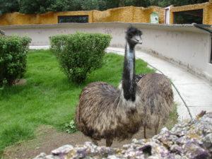 Zoológico de Tlaxcala, Ecología, Maleta de Viajes, turismo, animales, aventura, viajes,