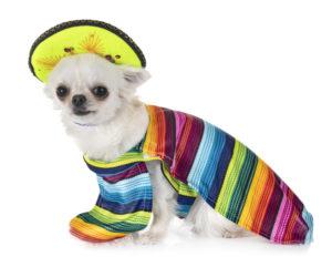 DogHero, Perros, Maleta de Viajes, turismo, aventura, concurso, Día de la Independencia