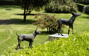 Dog Hero, perros, Día de la Independencia, Maleta de Viajes, notiviajero