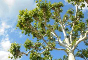 Maleta de Viajes, CDMX viajes, turismo, Navidad, bosque, árbol, Tree Nation, medio ambiente