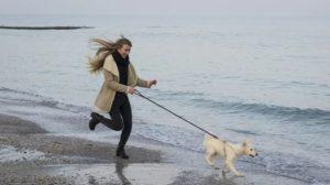Maleta de Viajes, Notiviajeros, viajes, turismo, Navidad, mascotas, perros, TurismoCity, vuelos