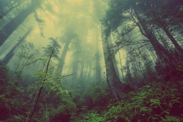Maleta de Viajes, viajes, turismo, cultura, ecología, Tree-Nation, árboles, Maleta Eco