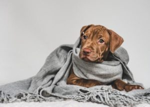 Maleta de Viajes, viajes, turismo, cultura, perros, frío, mascotas, Maleta Pet