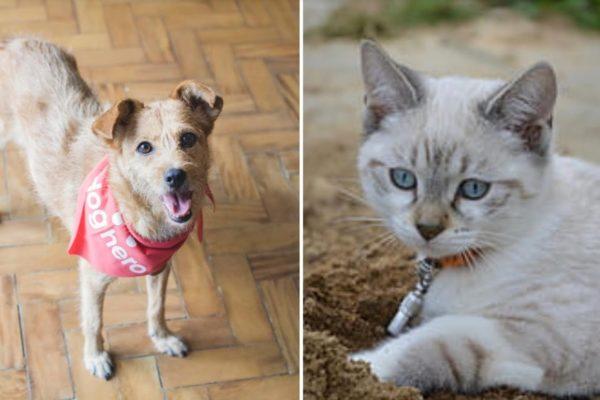 Maleta de Viajes, viajes, turismo, cultura, Dog Hero, perros, gatos, mascotas
