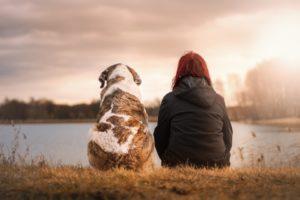 Maleta de Viajes, viajes, turismo, mascotas, perros, Maleta Pet, petfriendly