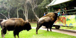 Maleta de Viajes, viajes, Bioparque Estrella, turismo, animales, coronavirus