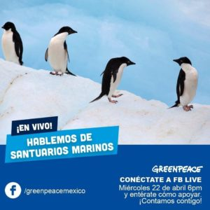 Foto:Greenpeace