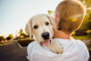 Maleta de Viajes, perros, gatos, mascotas, Mister Mascota, coronavirus, Maleta Pet
