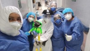 Maleta de Viajes, Harley, Centro Médico 20 de Noviembre, perro, Maleta Pet