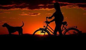 Maleta de Viajes, viajes, turismo, mascotas, Maleta PET, nueva normalidad, mascotas