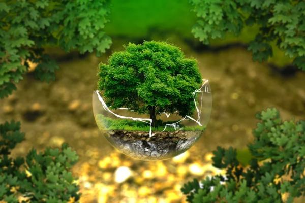 Maleta de Viajes, viajes, turismo, ecología, medio ambiente, Greenpeace México, Día Mundial del Medio Ambiente