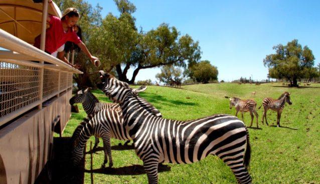Maleta de Viajes, Maleta Pet, Reino Animal, Covid-19, viajes