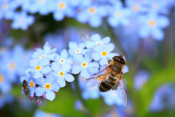 Maleta de Viajes, abejas, Toks, Maleta Pet, COVID-19, turismo