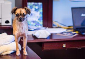 Maleta de Viajes, Maleta Pet, perros, mascotas, trabajo, estrés