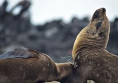 Maleta de Viajes, Maleta Eco, Los Cabos, turismo, Fundación AMA Saving The Oceans