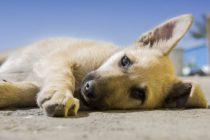 Maleta de Viajes, Maleta Pet, viajes, turismo, aventura, MSD Salud Animal, mascotas