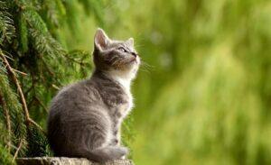 Maleta de Viajes, animales, mascotas, Maleta Pet, MSD Salud Animal