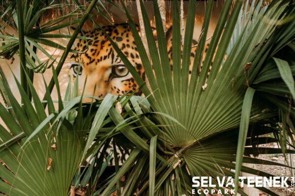 Maleta de Viajes, Hoteles, viajes, turismo, aventura, Selva Tenek, San Luis Potosí
