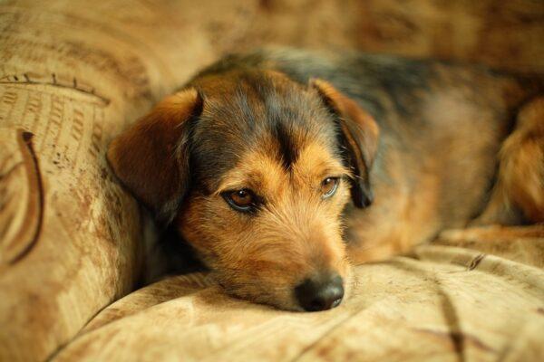 Maleta de Viajes, viajes, turismo, Karcher, Maleta Pet, mascotas