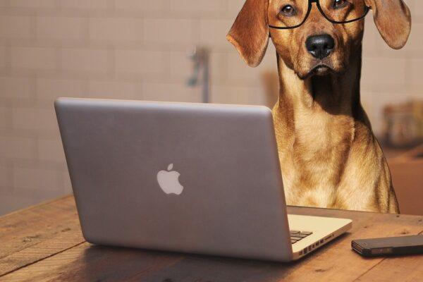 Maleta de Viajes, Maleta Tech, viajes, turismo, aventura, perros, AT&T