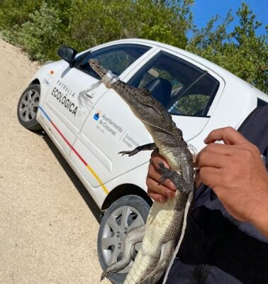 Maleta de Viajes, Maleta Pet, Cozumel, animales, medioambiente, fauna, Quintana Roo, turismo, aventura