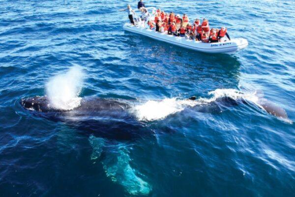 Maleta de Viajes, Maleta Pet, viajes, turismo, aventura, Riviera Nayarit
