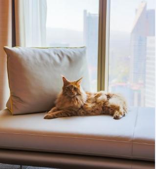 Maleta de Viajes, Hoteles, viajes, turismo, aventura, Sofitel Mexico City, día del gato, gato, Maleta Pet