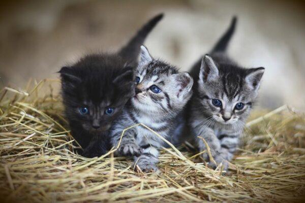 Maleta de Viajes, Maleta Pet, viajes, turismo, aventura, viajeros, MSD Animal, gatos