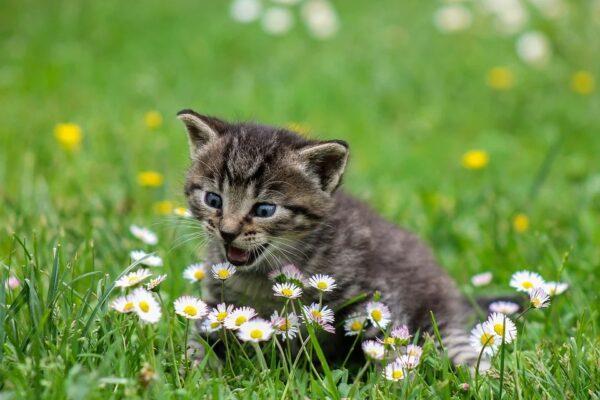 Maleta de Viajes, Maleta Pet, viajes, turismo, aventura, Purina One Cat