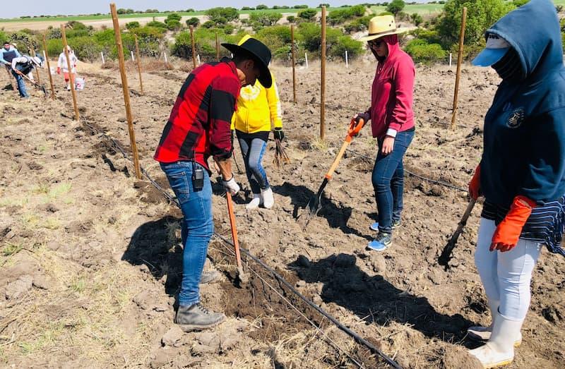 Personas trabajando la tierra del viñedo.
