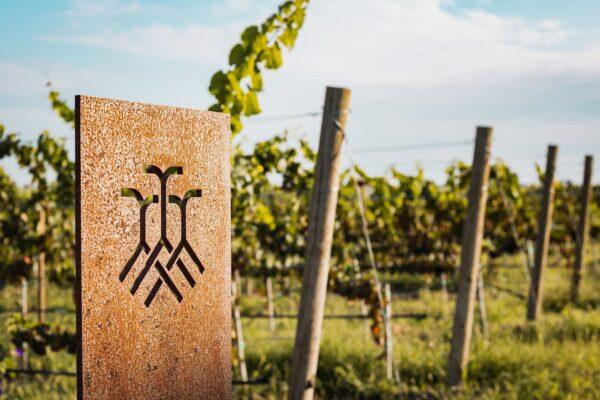 Foto del viñedo Tres Raíces