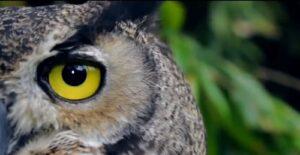 El Nido, aviario, especies de aves, Ixtapaluca, santuario de aves, quetzal, Jesús Estudillo López, vida silvestre, avestruz, cacatúa, guacamaya, emu, turaco de mejillas blancas