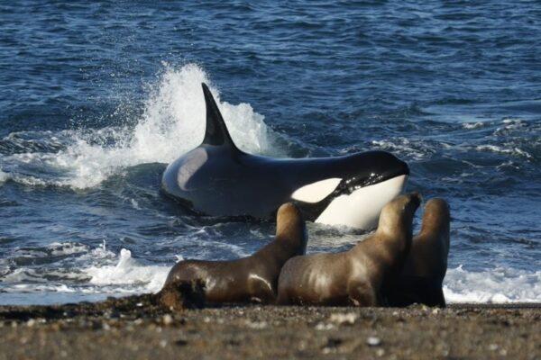 Maleta de Viajes, Internacional, viajes, turismo, aventura, orcas, Argentina, Maleta Pet