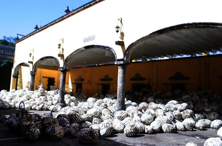 Maleta de Viajes, Hoteles, viajes, turismo, aventura, Mundo Cuervo, Jalisco