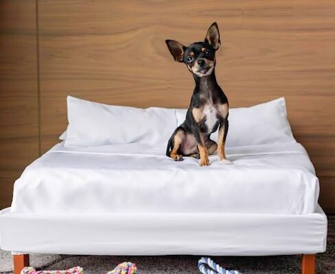 Maleta de Viajes, Hoteles, viajes, turismo, aventura, Sofitel, perro