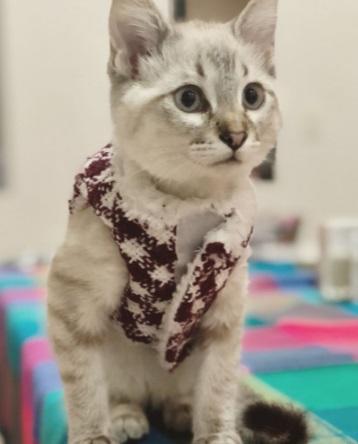 Maleta de Viajes, Hoteles, viajes, turismo, aventura, gato, Día del Gato