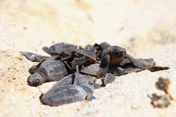 Maleta de Viajes, Hoteles, viajes, turismo, aventura, Puerto Morelos, tortugas