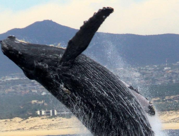 Maleta de Viajes, Hoteles, viajes, turismo, aventura, Rancho San Lucas, Los Cabos, Baja California Sur
